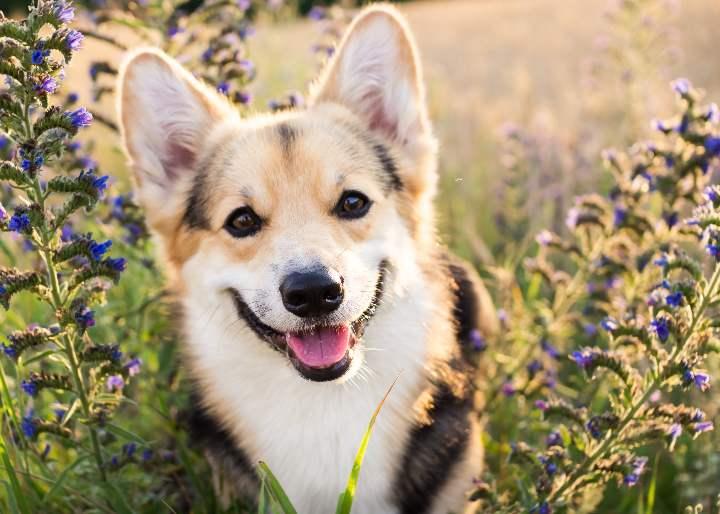 Confirman que los perros sonríen al estar felices