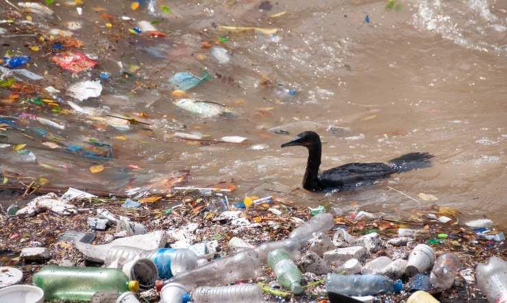 Pájaro nadando en basura