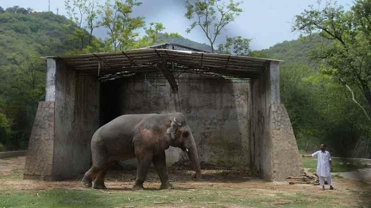 Kavaanelefante