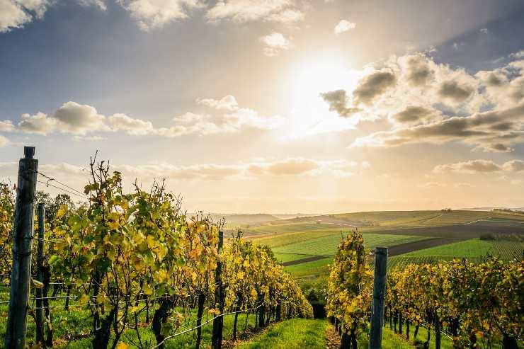 vitivinicultura ecológica