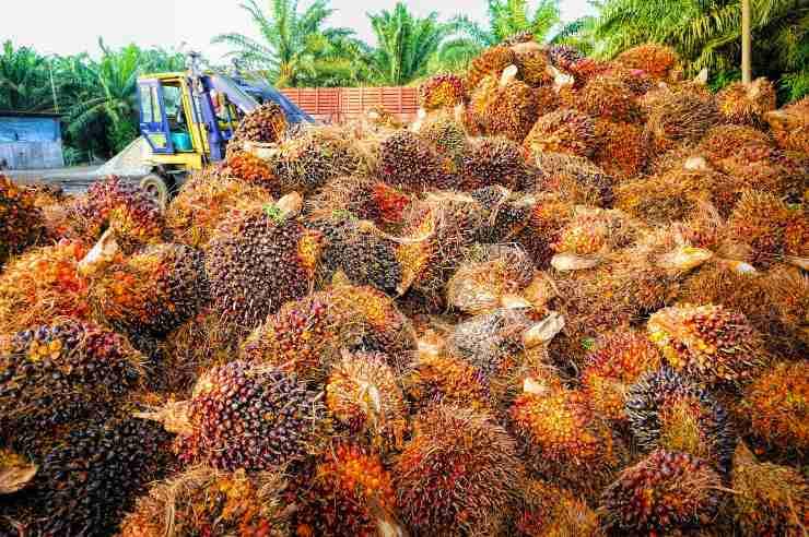 Indonesia arrasada por el aceite de palma