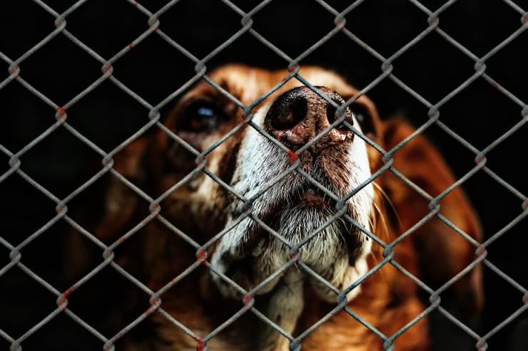 Maltratadores de animales Australia