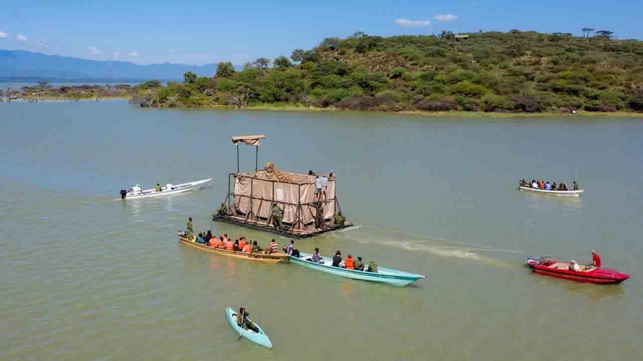 Las jirafas son rescatadas en barcazas especialmente diseñadas (Save the Giraffes).