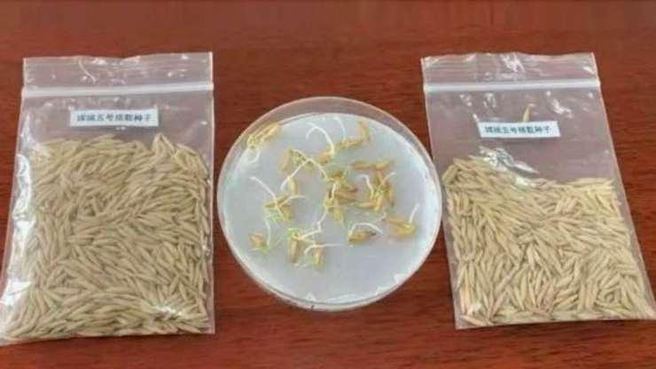 mision lunar semillas arroz