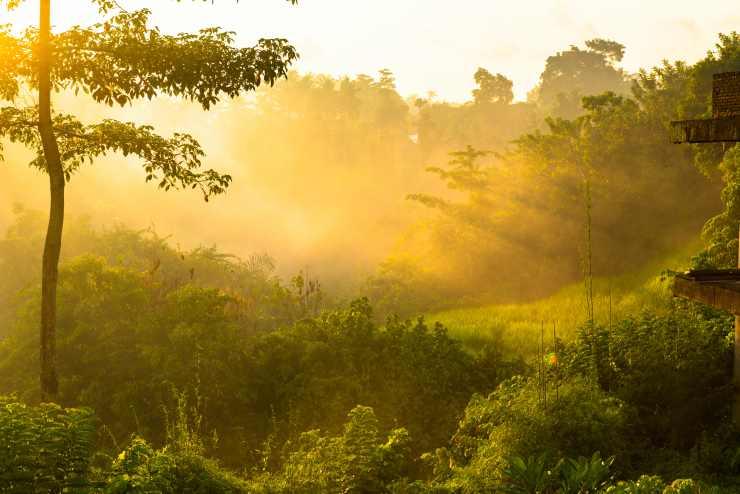 La ciencia intenta proteger la biodiversidad