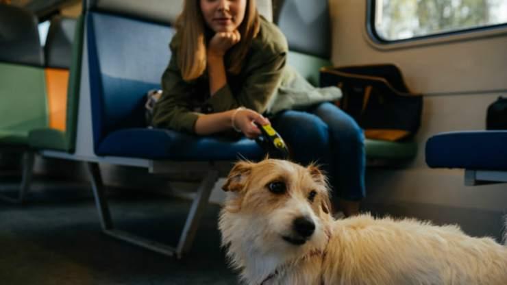 viajar con mascotas al exterior
