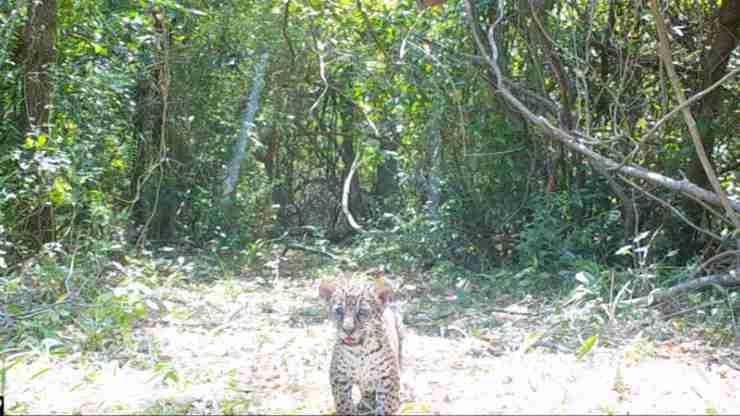 Fundacion Rewilding Argentina
