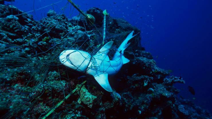 animales marinos mueren atrapados en redes fantasma