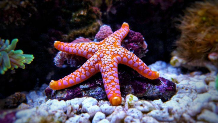 Extraña enfermedad podría extinguir a las estrellas de mar