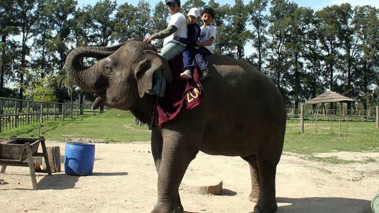 muere un elefante en Zoo de Lujan
