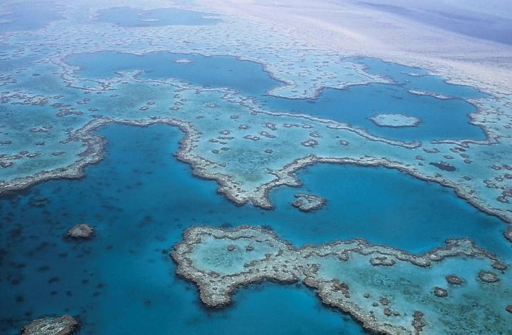 Gran Barrera de Coral de Australia en peligro