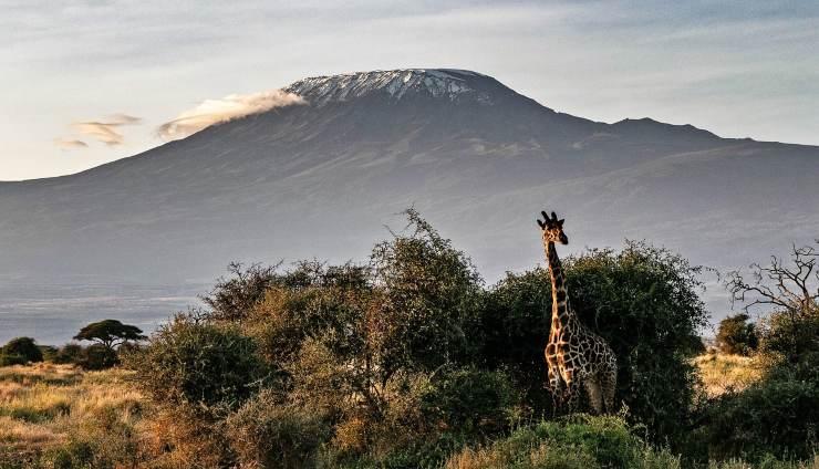 Cumbre del Kilimanjaro en peligro