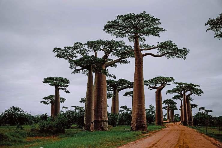 Madagascar en peligro