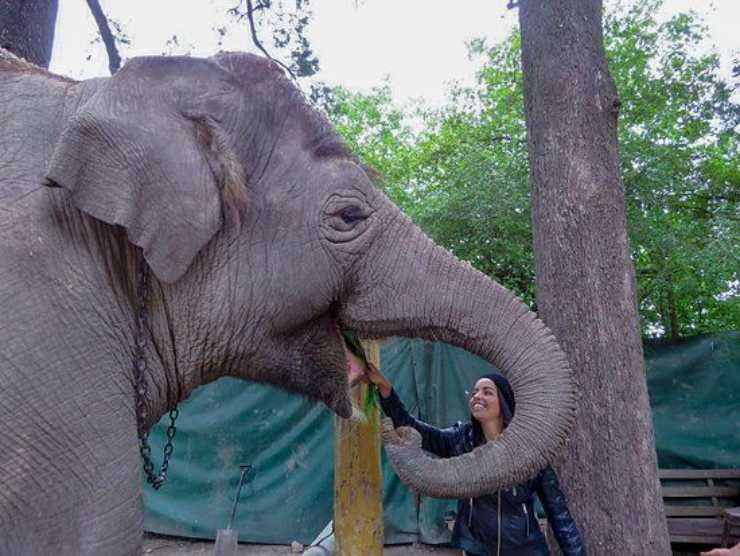 elefanta Sharima