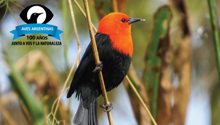 La app de Aves Argentinas es una guía de campo para no perder detalles (Avesargentinas.org.ar).
