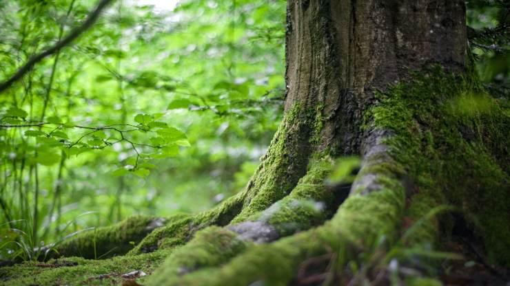 La ONU apuesta por un 2030 con más bosques en el planeta