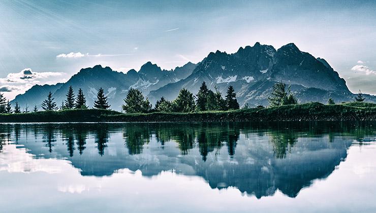 El cuidado de los bosques fue uno de los temas principales en la One Planet Summit (Foto de Pixabay - Pexels).