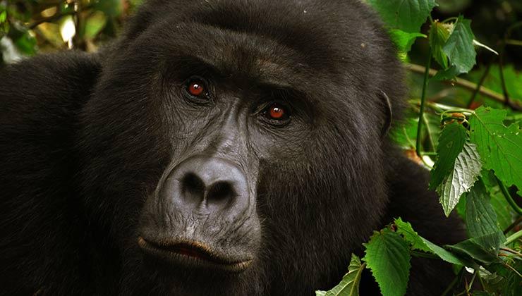 La protección de bosques implica la protección de biodiversidad (Foto de The World Hopper - Pexels).