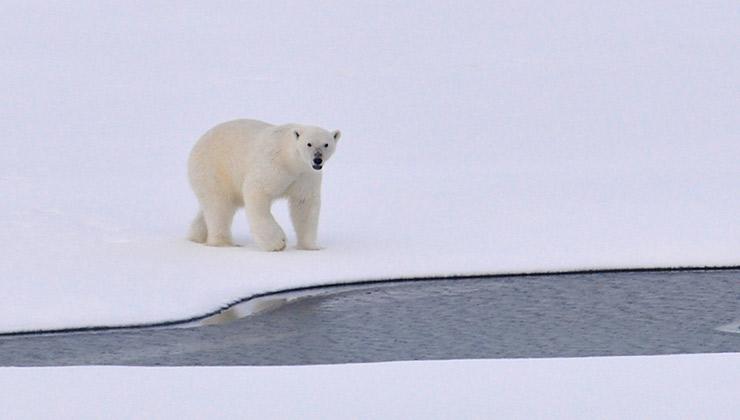 La brecha en la capa de ozono apareció en el Polo Norte.