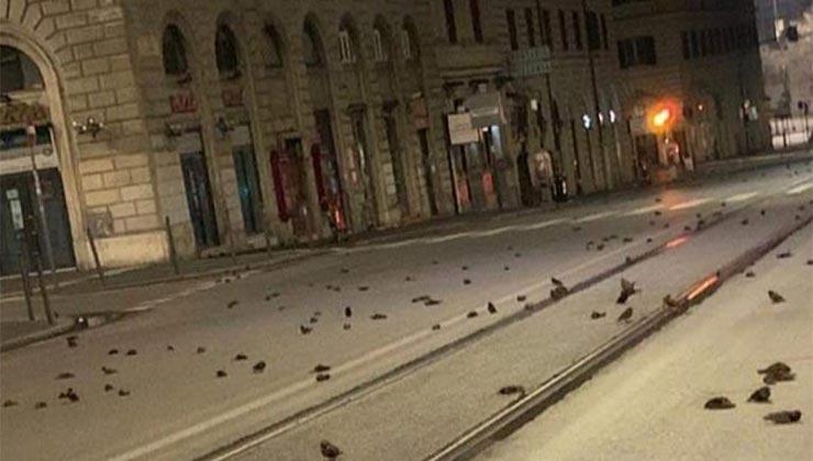 Los pájaros muertos fueron una postal de año nuevo en Roma (Twitter - OIPA).