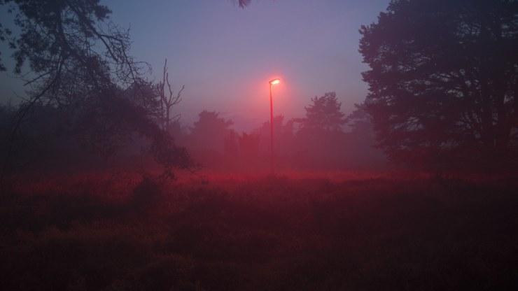 El pueblo holandés que se ilumina de rojo para ayudar a los murciélagos