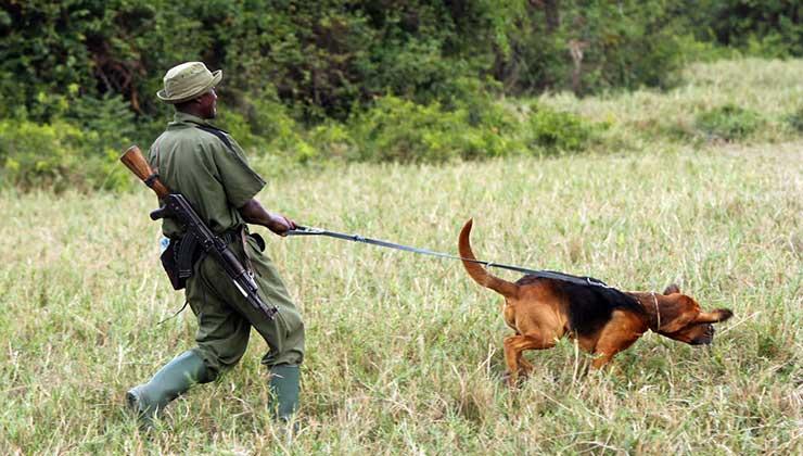 Más de 600 rangers protegen el parque (Foto Parque Nacional Virunga).