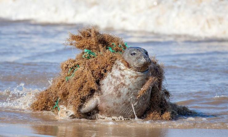 redes fantasma: trampas mortales para la fauna marina