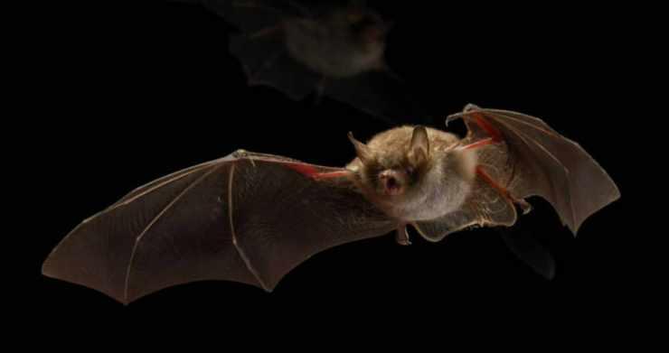 a town bat friendly