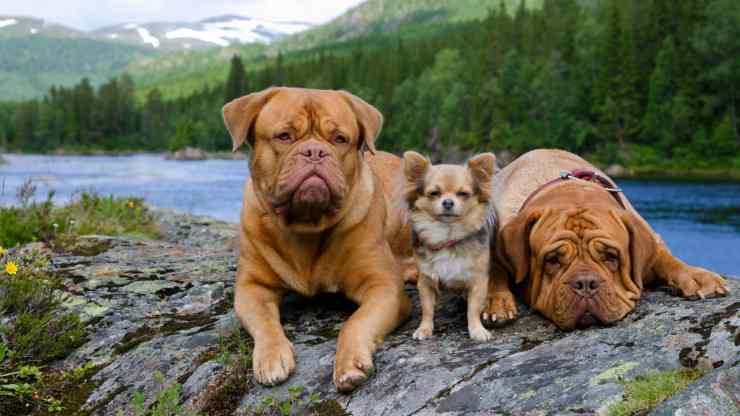 Viajes dogfriendly