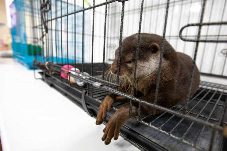 no viraliceslas fotos de nutrias mascota