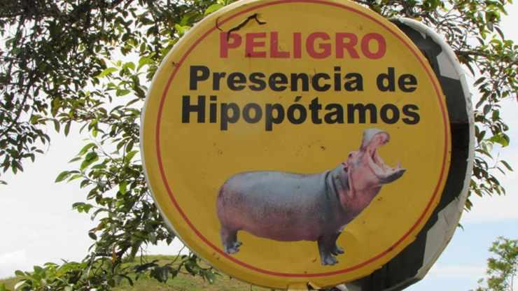 podrían sacrificar hipopótamos en Colombia