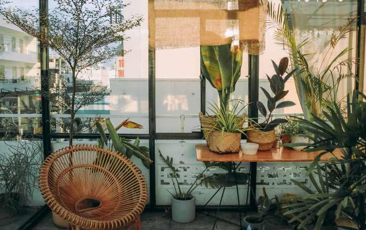 Plantas exterior
