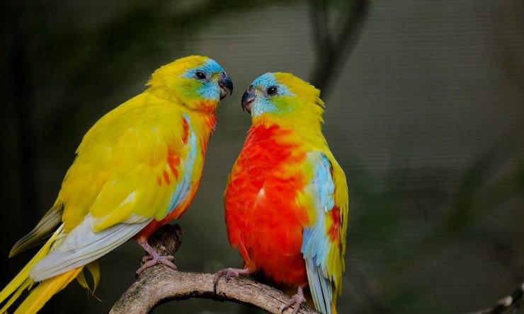 animales que eligen pareja para toda la vida