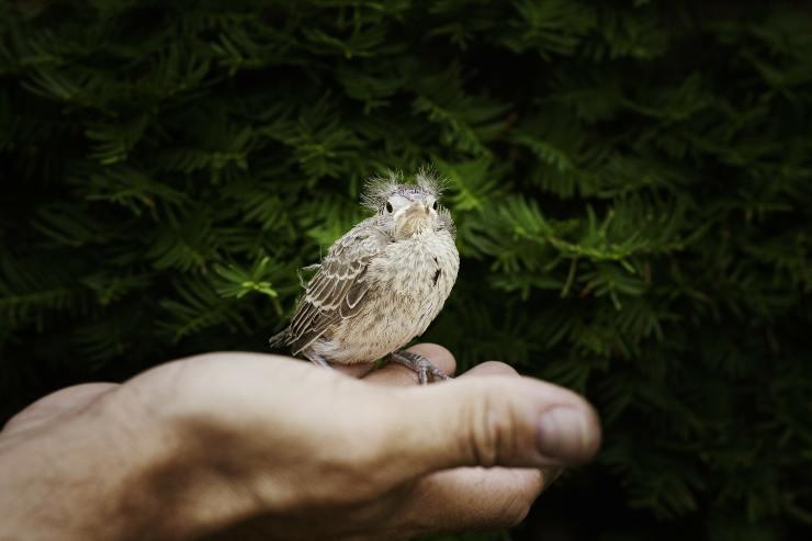 la biodiversidad hace más felices a las personas