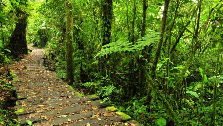 En el parque Bosque Nuboso Monteverde la naturaleza explota en verde (Foto de Visit Costa Rica).