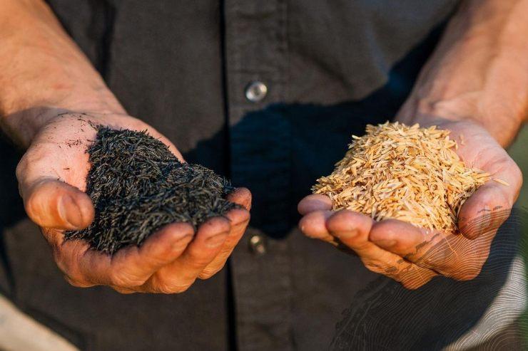 Carbón ecológico fabricado con cáscaras de arroz