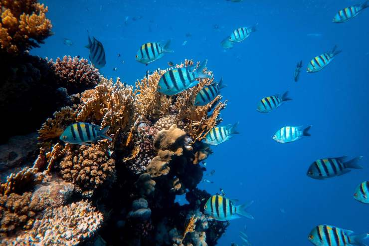 Los arrecifes de coral podrían desaparece este siglo