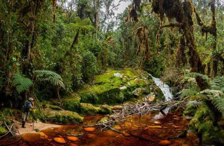 la importancia ecologica de los guacharos