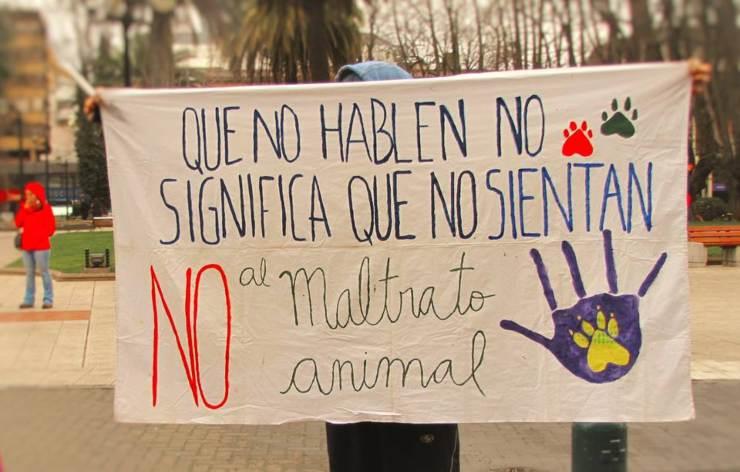 El debate en la defensa de los animales: ¿bienestarismo o abolicionismo?