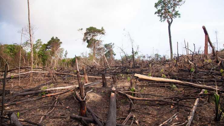 Deforestación: Argentina tiene 100 mil hectáreas menos de bosques