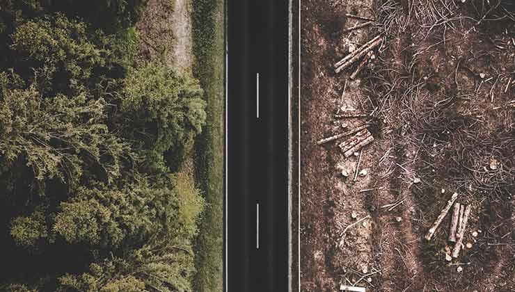 La deforestación y la pérdida de ecosistemas es una de las causas del calentamiento global (Foto de Justus Menke - Pexels).