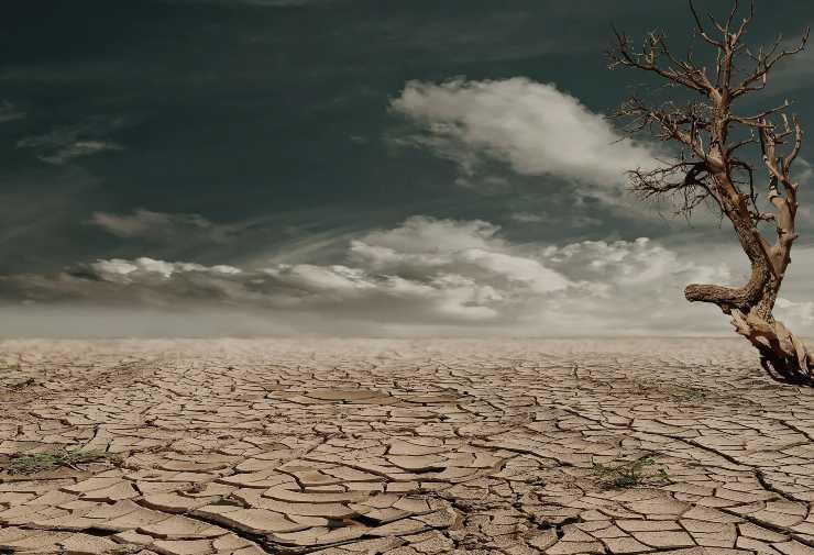 biodiversidad de los suelos