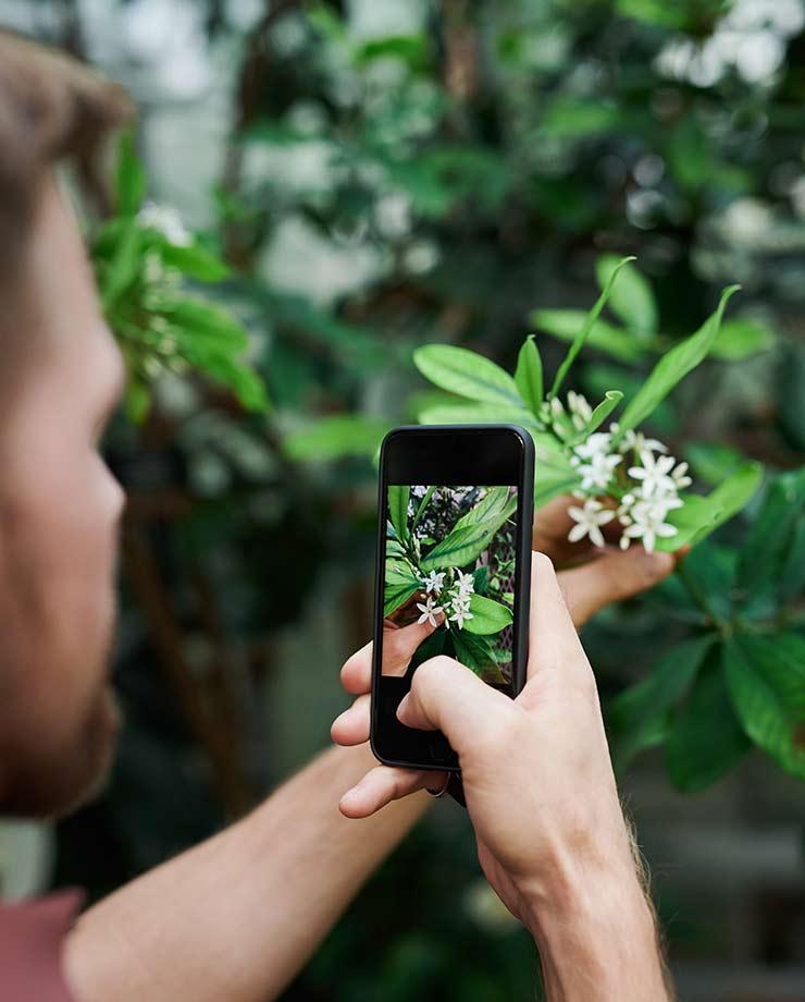 Para sacar fotos de flores lo mejor es acercar el teléfono (Foto de fauxels - Pexels).