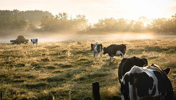 La producción agrícola ganadera es una de las razones de los desmontes en Argentina (Foto de Lukas Hartman - Pexels).