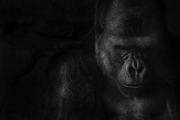 El cruel negocio del tráfico de animales