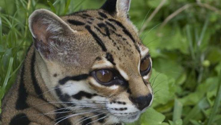 Los encuentros con la fauna son frecuentes en las visitas a Costa Rica (Foto de Visit Costa Rica).