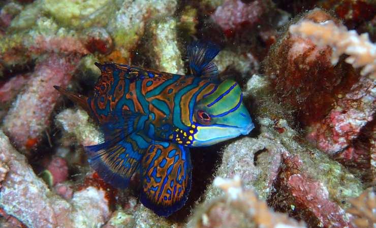 los peces más bonitos del mundo