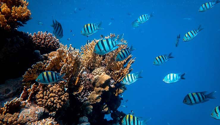 Los arrecifes de coral son ecosistemas elementales de los océanos que se deben proteger (Foto de Francesco Ungaro - Pexels).