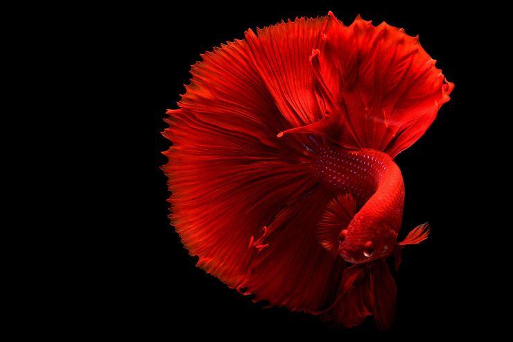 los peces mas lindos del mundo