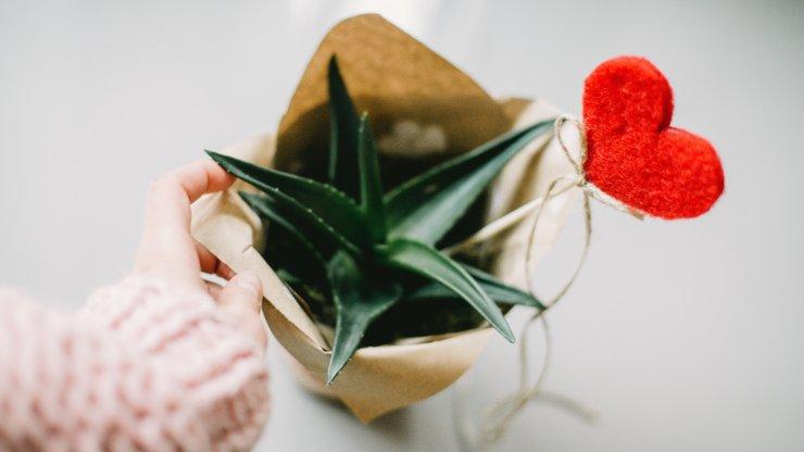 Ideas creativas para regalos ecofriendly en San Valentín
